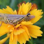 grasshopper3